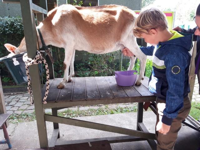 Leer D op de kinderboerderij